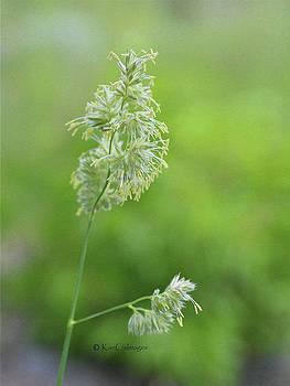 Kae Cheatham - Flowering Tall Grass