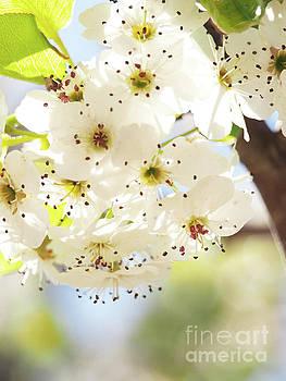 Flowering Tree 2 by Dorothy Lee