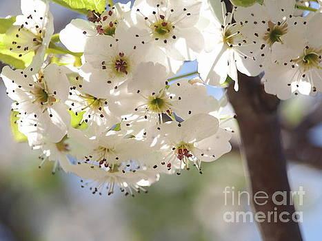 Flowering Tree 3 by Dorothy Lee