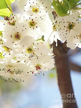 Flowering Tree by Dorothy Lee