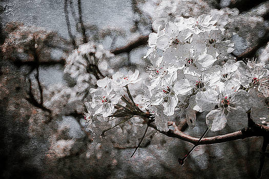 Flowering Tree by Garett Gabriel