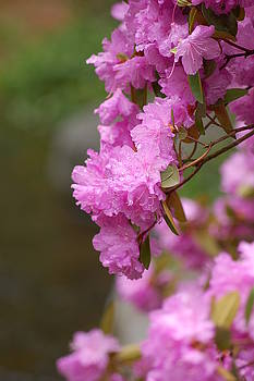 Flowering Tree by Jennifer Englehardt