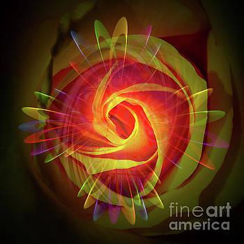 Flowermagic 24 Rose by Walter Zettl