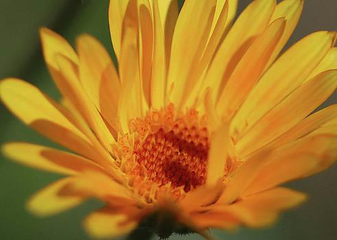 Ely Arsha - Flowers 1