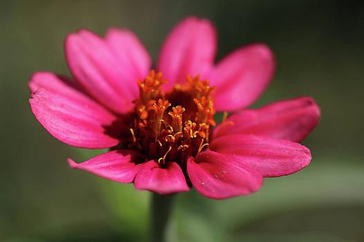 Ely Arsha - Flowers 2