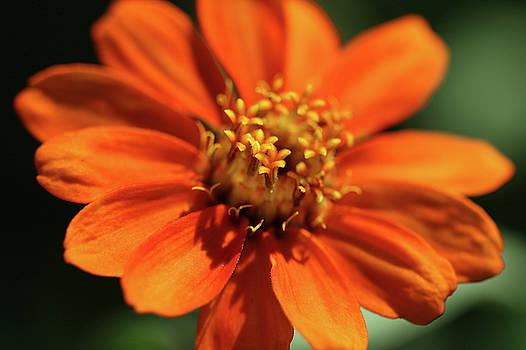 Ely Arsha - Flowers 3