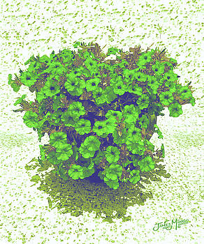 Flowers 5 by James  Mingo