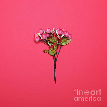 Flowers against bright red background - Minimal concept by Aleksandar Mijatovic
