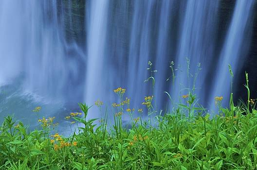 Flowers against Waterfalls by Jenesse Studios