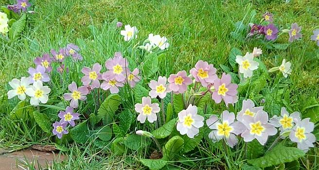 Flowers along the edge 1006 by Julia Woodman
