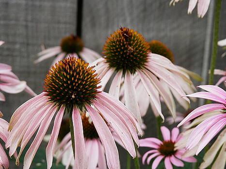 Flowers Along The Fence by Deborah Kunesh