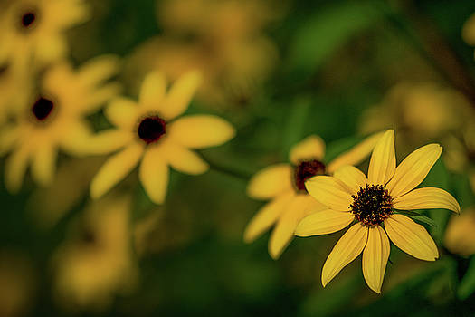 Flowers Along The Maumee River by Michael Arend