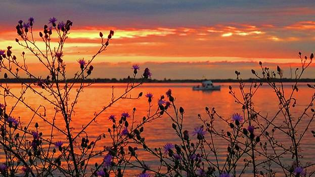 Flowers along the shore at Tibbetts Point  by Dennis McCarthy