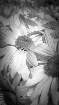 Flowers by Amanda Eberly-Kudamik