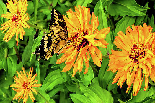Flowers and Butterflies by Pat Cook