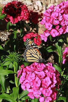 Flowers and Butterfly by Judy C Moses