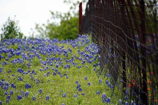 Flowers and Fences by Debi Demetrion