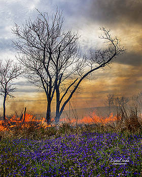 Flowers and Fire by Crystal Socha