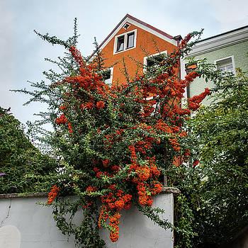 Andrew Wilson - Orange