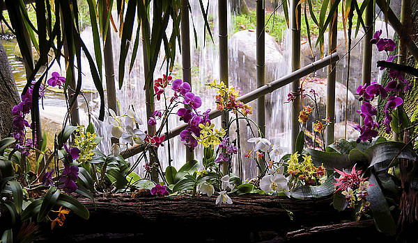 Flowers and Waterfall by Steven Sparks