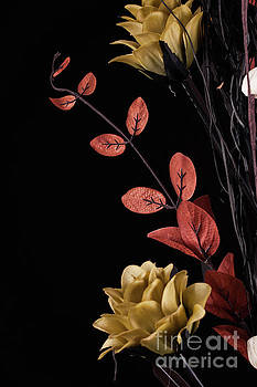Flowers arrangement with black background by Simon Bratt Photography LRPS