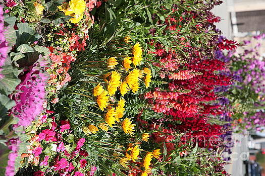 Chuck Kuhn - Flowers Assorted
