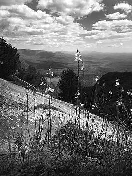 Flowers at the Top of Table Rock Trail by Kelly Hazel