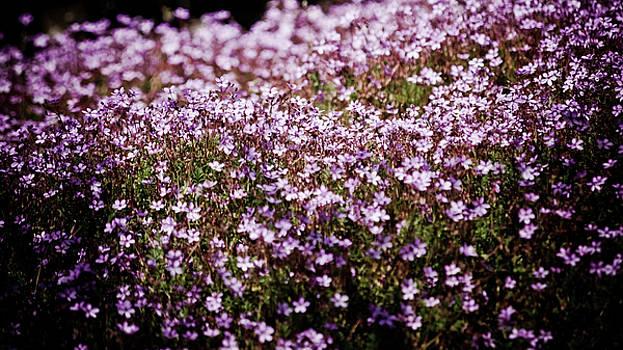 Flowers by Felix M Cobos