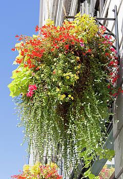 Ramunas Bruzas - Flowers From Seattle