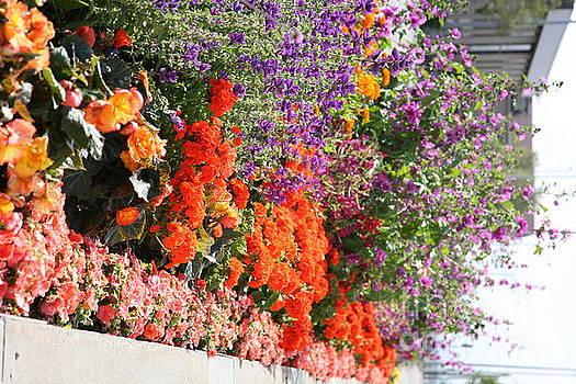 Chuck Kuhn - Flowers Galore