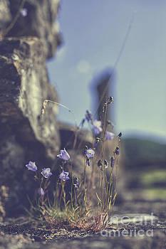 Patricia Hofmeester - Flowers growing on rocks