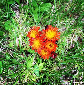Flowers by H Surette