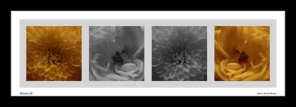 Flowers II by Victor Daniel  Rosas Flores