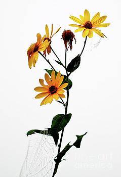 Flowers In A Fog by Douglas Stucky