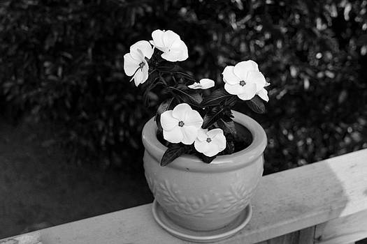 Flowers In Black and White by Carolyn Ricks