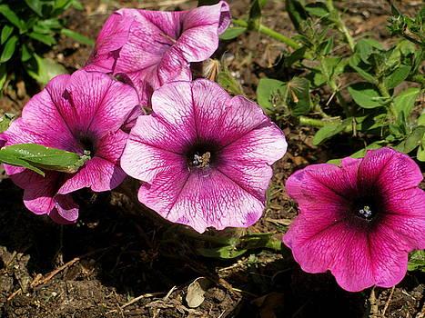 Sherri Williams - flowers in bloom