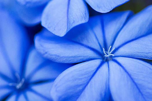 Flowers in Blue by John McQuiston