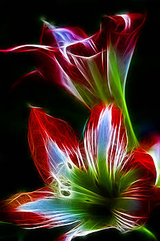 Flowers in Green and Red by Lisa Stanley