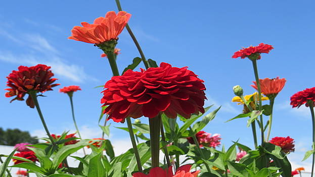 Flowers in the Blue by Jeanette Oberholtzer