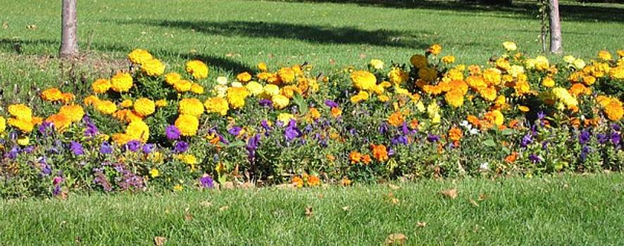 Flowers in the Park II by Krista Barth
