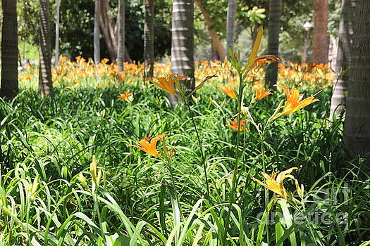 Flowers in the park by Jackie Mestrom
