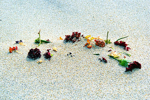 Flowers in the Sand by Eddy Mann