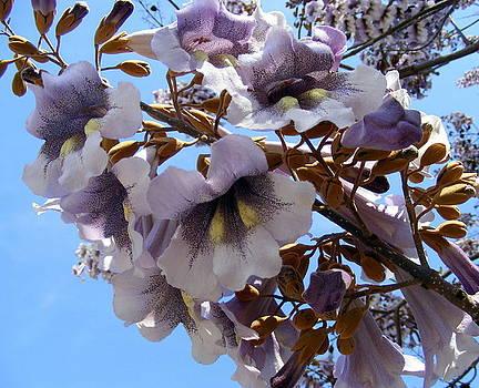 Flowers In the Sky by Elena Tudor