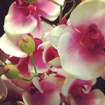#flowers #instagood #beautiful #pink by Shyann Lyssyj