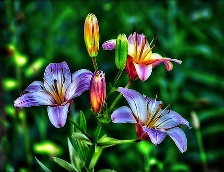 Flowers by Jeff S PhotoArt