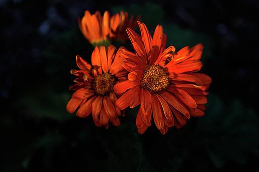 Flowers by Kaos Studios