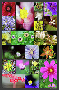 Flowers Large by Brian Roscoe
