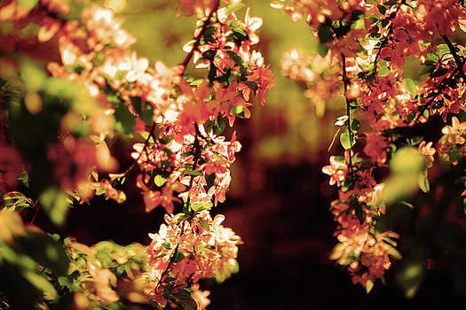 Flowers by Lucian Capellaro