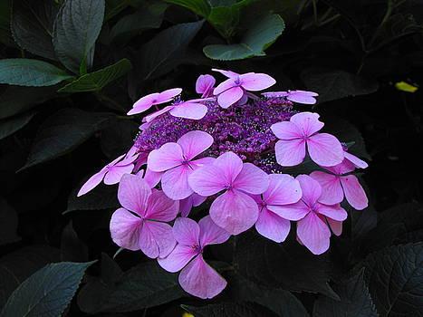 Flowers by Marianne Mason