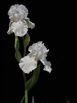 Flowers by Martha Kinel